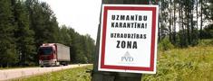 Āfrikas cūku mēri apstiprina vēl astoņām meža cūkām Latvijā