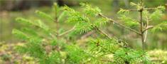 Aptauja par Mežu stāvokli Latvijā