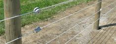 Čehijā cūku mēri mēģinās apturēt ar elektrisko žogu
