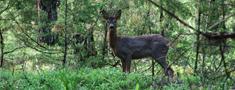 Cer samazināt notriekto meža dzīvnieku skaitu