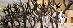 Dagdā vērtēs medību trofejas un atklās izstādi