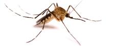 Iesakām: odu slazdu pret uzmācīgajiem kukaiņiem