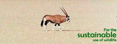 Ilgtspējīgas medības – 21.gs. aizsardzības instruments