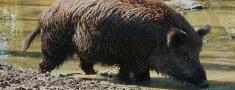 Jaunas platības, kur ir ierobežojumi medību organizēšanā