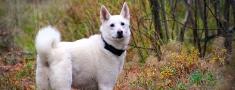 Kad medību suns jāved pie veterinārārsta?