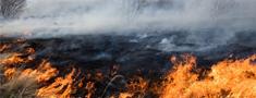 Kūlas dedzināšana - katastrofāls posts Latvijas dabai