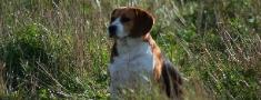 Lai Latvijā ievestu suni no ārzemēm