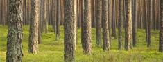 Latvijas Mežu sertifikācijas padome aicina uz konferenci