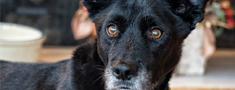 Līdz 2017.gada 1.janvārim atcelts termiņš obligātai suņu apzīmēšana ar mikroshēmu