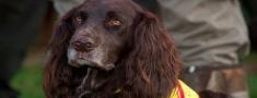 Medību suņu izmantošanas aizliegums