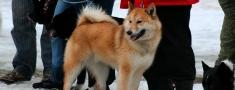 Medību suņu izstāžu un darba grafiks 2012. gadam