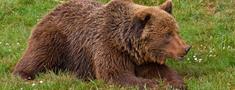 Melbāržu apkaimē manīti lāči