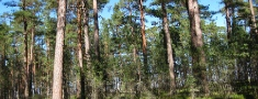 Meža platības Latvijā nesamazinās