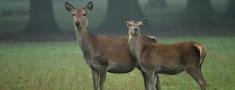 Noteikumi mednieku un medību vadītāju kvalifikācijas celšanai
