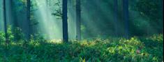 Par izmaiņām Meža likumā no 2015. gada 1. janvāra