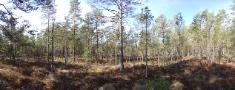 Rūpes par medņu riestu aizsardzību