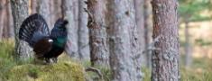 Sekmē medību resursu apsaimniekošanas un izmantošanas uzraudzību