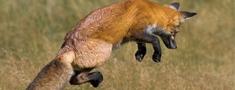 Seminārs: Dzīvnieku pievilināšana ar mānekļiem