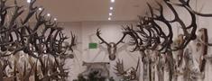 Skrundā izveido medību trofeju izstādi