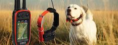 Suņu izsekošanas iekārtas
