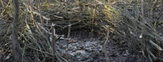 Tērvetes dabas parka teritorijā atkārtoti aizturēts malumednieks