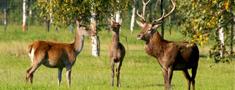 Turpinās semināri par selektīvu staltbriežu medību pamatprincipiem