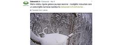 Vai dabas aizsardzība ir izdevīgi meli īstajā brīdī?